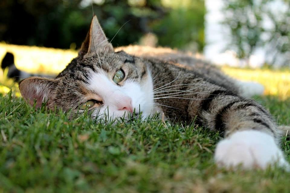 cat-173669_960_720