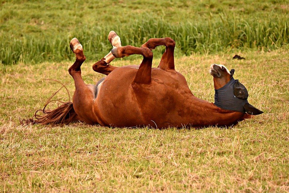 horse-3602261_960_720