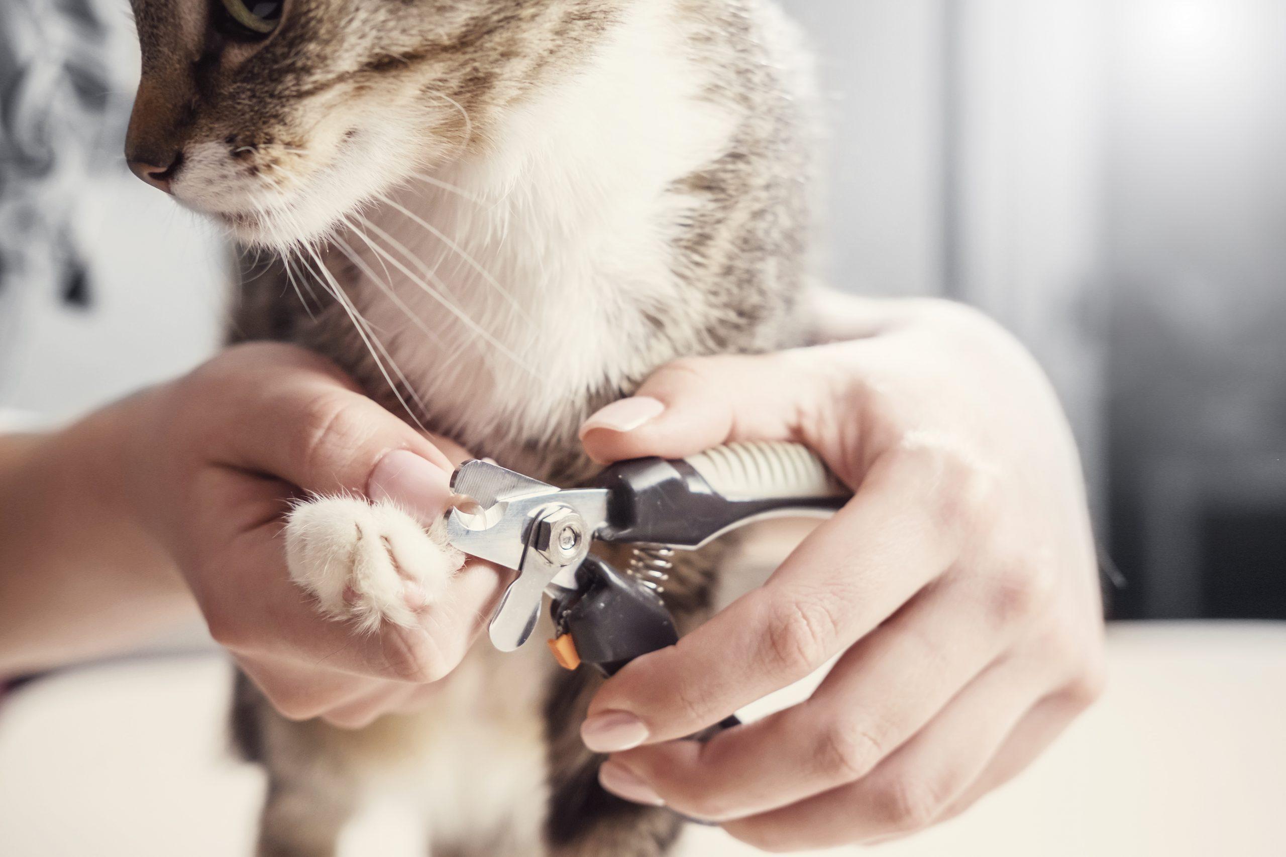 Krallen schneiden bei Hund & Katze